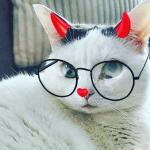 avatar de LibelluleQuebec